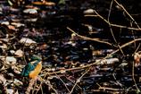 水辺の鳥たちⅢ