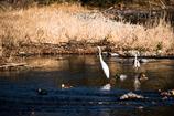 水辺の鳥たちⅡ