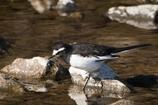 水辺で出会った鳥たちⅥ