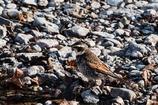 水辺で出会った鳥たちⅤ