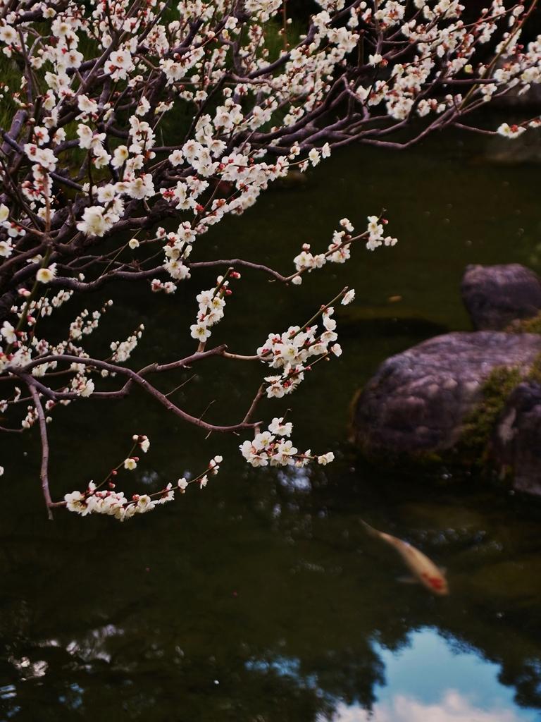 京都 城南宮 庭園の春意