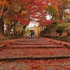 京都 毘沙門堂の秋楓 III