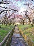 京都 北野天満宮 春の足音
