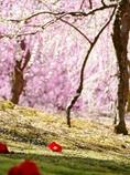 京都 城南宮 春の陽気