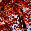 茅ヶ崎中央公園の紅葉(2)