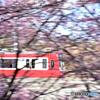 桜色の疾走
