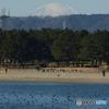 八景島から見た富士山