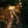 八島ヶ原湿原(朝の木道)