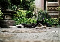 猫撮り散歩1271