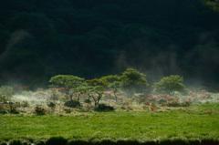 沸き立つ湿原