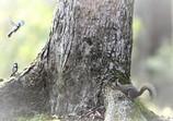 メルヘンの樹