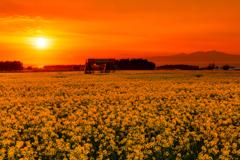 春 -夕暮れ-