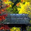 色鮮やかな山門