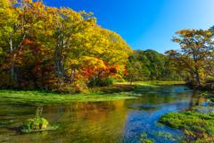 朝のグダリ沼 I