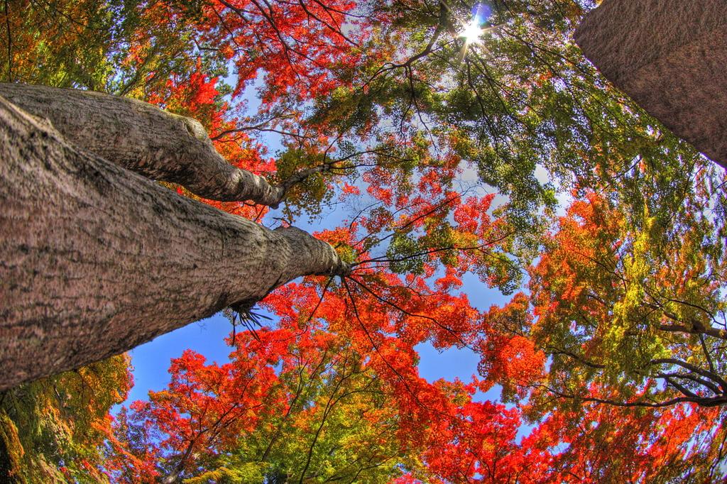 秋を見上げて