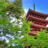 新緑と五重塔