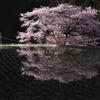諸木野に咲く2011