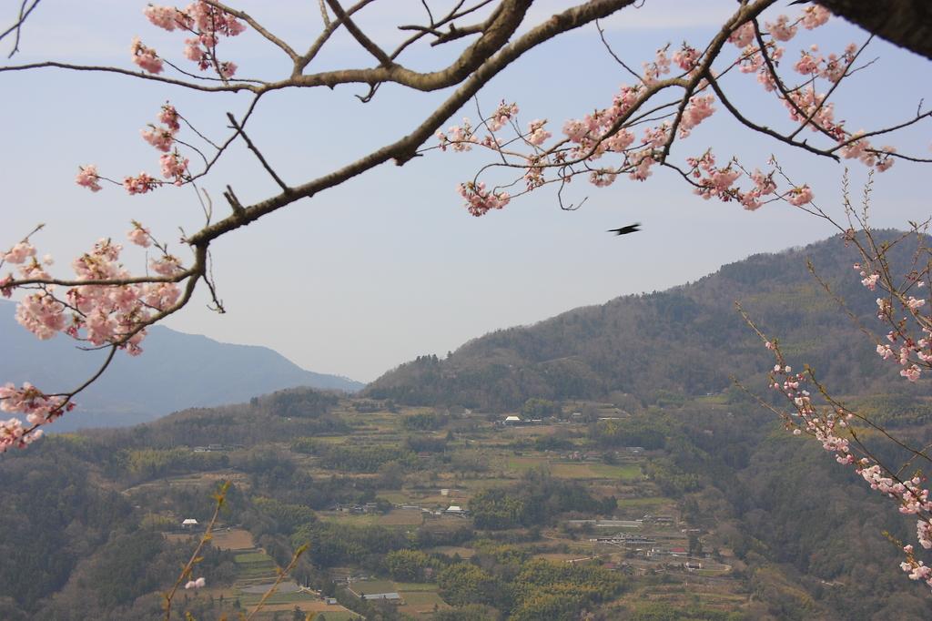 山里の春 2