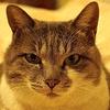 Cat ・・・目が合ってしまった・・・