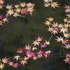 12月平安神宮