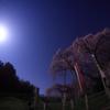 千夜月夜桜