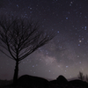 銀河を纏う樹