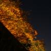 秋の夜の三色