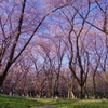 Forest of Spring