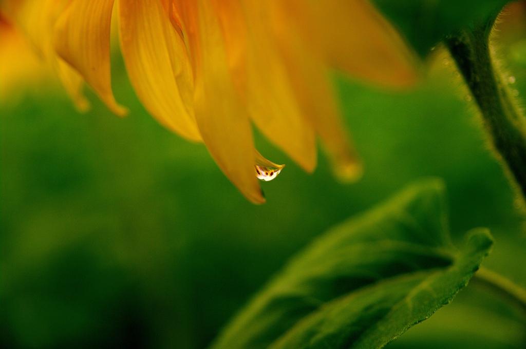 雨のレンズ