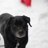 雪と愛犬2