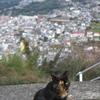 坂の街の猫