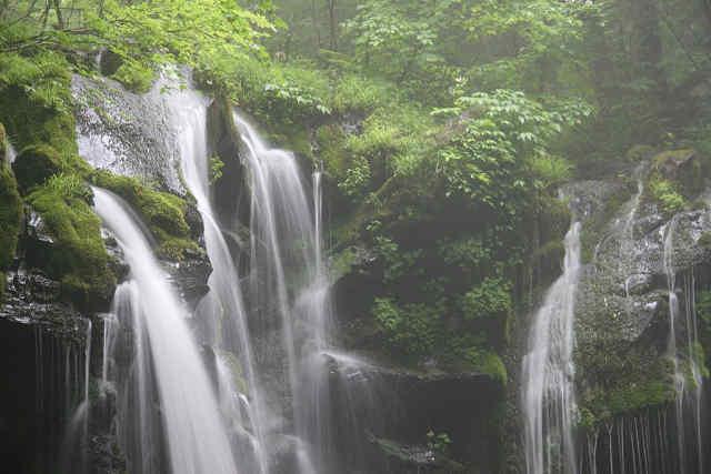 霧雨の猿壷の滝