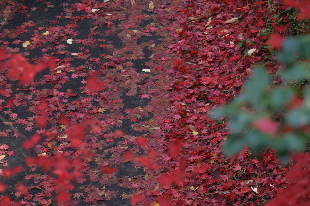 養父神社の紅葉