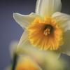 春の目覚め2