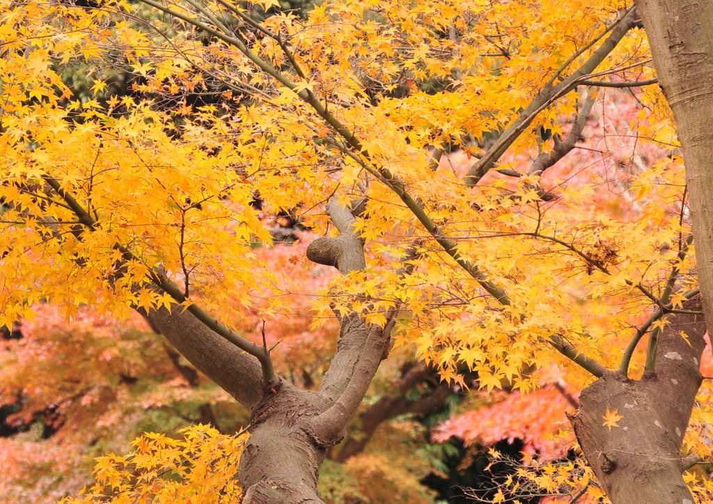 鎌倉 038