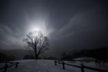 Luminescence tree