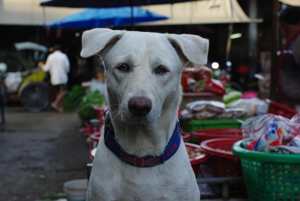 おとなしそうな市場の犬