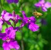 紫色のお花とハッチ 1