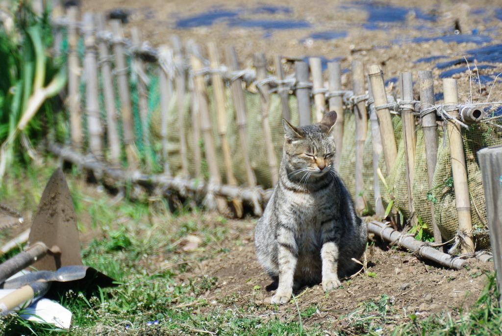 猫の手も借りたい。・・・畑仕事