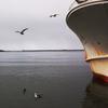漁船とカモメの休息