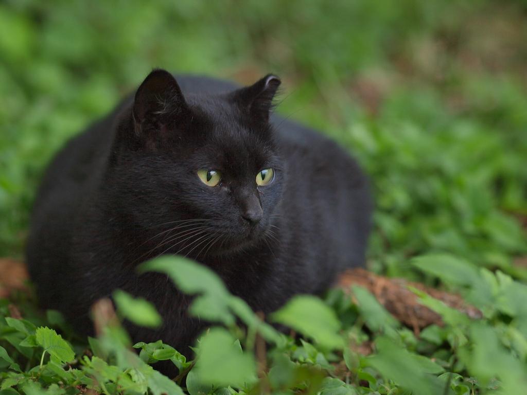 081018野良猫3