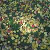 2008.11.19 落ち葉