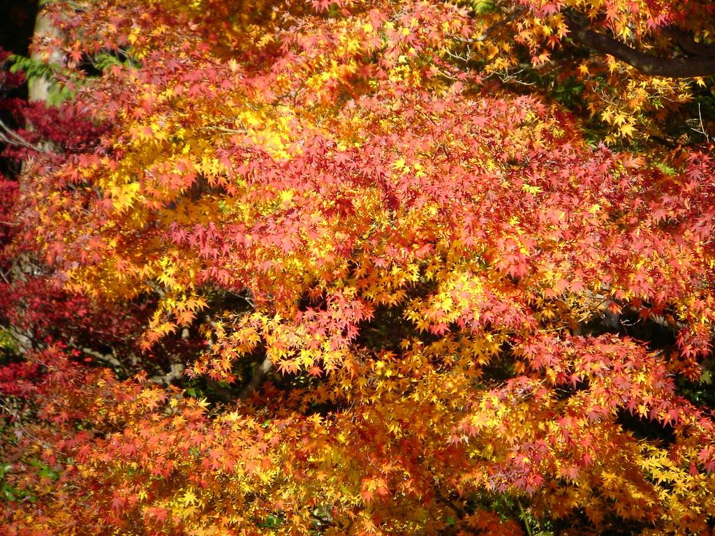 2008.11.19 昭和記念公園..