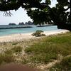 今年も阿嘉島に行く事ができました