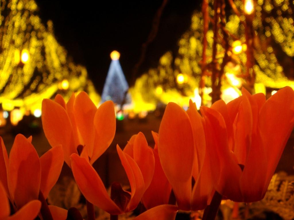 イルミネーションと花壇