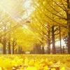 秋の陽射し