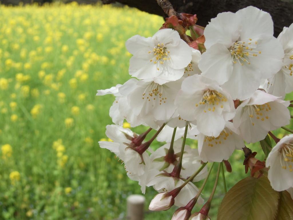 春ですねぇ~♪