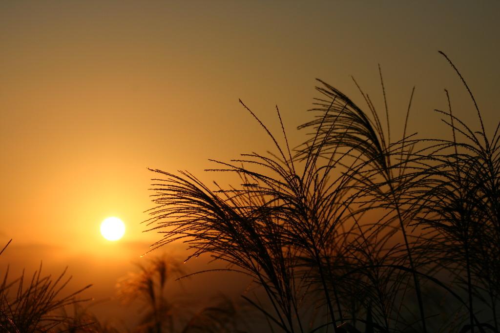 夕日とすすき
