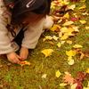 小さい秋 みぃつけた♪