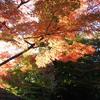 会津の紅葉03